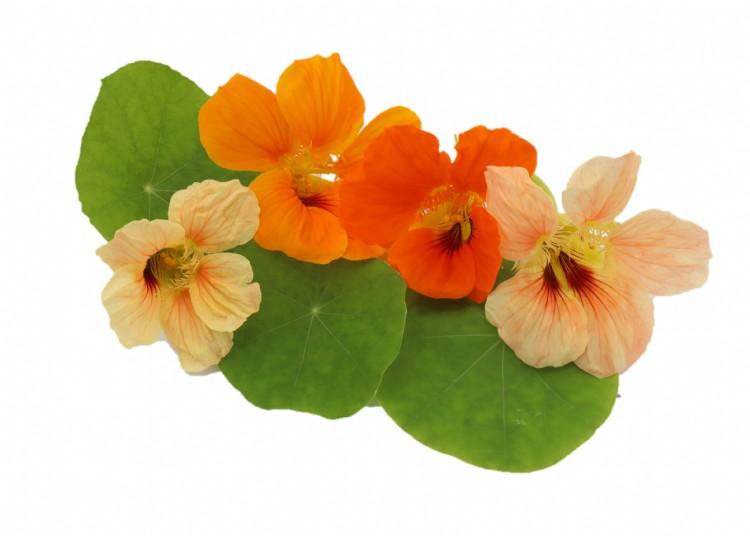 Oost Indische kers blad en bloemenmix